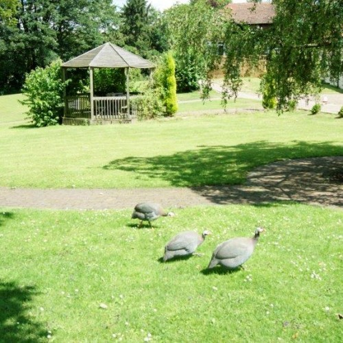 Our Foxby Hill gardens offer a great place to relax and take in the wildlife; with plenty of animals and even local birds walking the gardens, you will be able to stay in touch with nature.